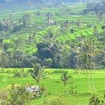 Jatiluwih Green Land Photo