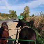 Pferdewagenfahrten Vinzenz Gangl