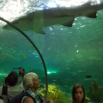 Underneath the shark tank - pretty awesome!