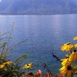 Photo de Lakeside Promenade Fleuri