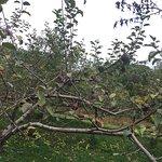 Wightman Fruit Farm