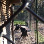 Photo of Tierpark Lange Erlen