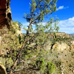 beautiful views of the canyons surrounding the cliff dwellings