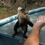 alimentando a los monos