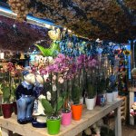 Photo of Flower Market / Bloemenmarkt