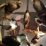 Some taxidermy of course