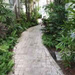Pathway to the pool