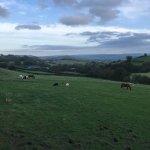 Cyfie Farm
