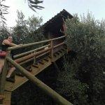 Casa-nido situada sobre un olivo.