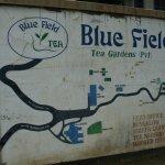 Photo of Bluefield Tea Gardens