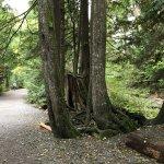 Photo de Shannon Falls Provincial Park