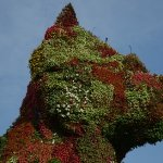 The dog in flowers
