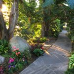 Morning at Meditation Gardens on path to koi ponds