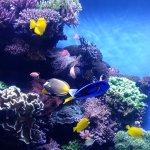 Photo of Monterey Bay Aquarium