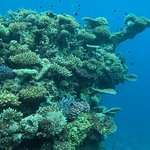Snorkelling - Astrolabe Reef