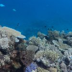 Snorkelling Astrolabe Reef