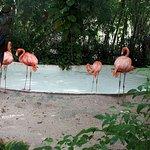 Photo of Xcaret Eco Theme Park