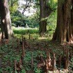 Neat trees