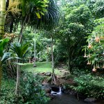 Luscious, creekside rainforest