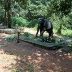 Photo de Kodanand Elephant Training Centre