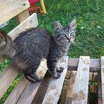 Auch andere Tiere (Katzen, Hunde, Ziegen) befinden sich auf der Ranch von Carlotta