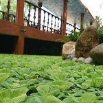 Billede af Ca Ty Muine Resort