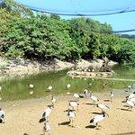 Neo Park Okinawa