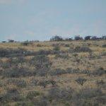 Spot the Giraffe