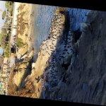 Foto de La Jolla Cove