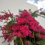 Photo of Hotel Iliana Panormos