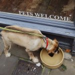 Ruby and the water bowls in the Shambles