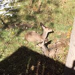 Baby deer relaxing on the property