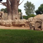 Photo de Bioparc Valencia