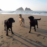 Dog friendly Holywell bay beach