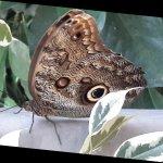 Photo de Jardins des Papillons