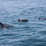 Wasini/dolphin spotting