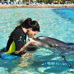 The dolphins are so cute and the dolphin trainers are so good at performing! I highly suggest th