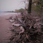 Beach #10 - Lots of driftwood