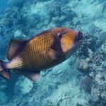Photo of Brayka Bay Reef Resort