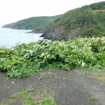 view at Meat Cove