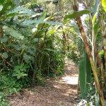 Bonito camino por los jardines, cascadas, vistas, plantas, olores, tranquilidad.
