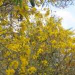 Naples botanical garden March 2017