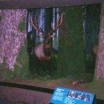 Royal British Columbia Museum - Natural History Gallery