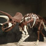 Brown is actual fossil bone, white is recreation. Amazing amount of real bone.