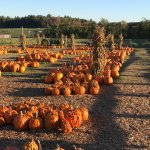 It's fall at the Farm