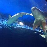 Sharks in Vancouver Aquarium