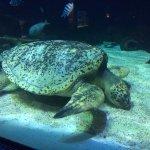 Sea turtle at Vancouver Aquarium