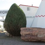 Petrified wood in the parking lot