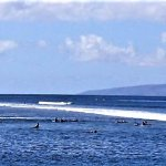 SURFERS FROM HARBOUR BREAKWALL; LANAI IN BACKGROUND