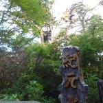 Photo of Kigensugi Cedar